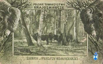 Puszcz białowieska