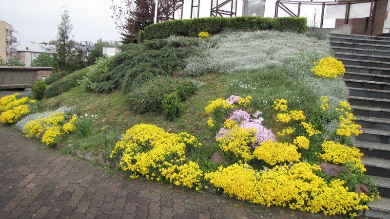 Kwiaty z lewej strony schodów. 2014 rok