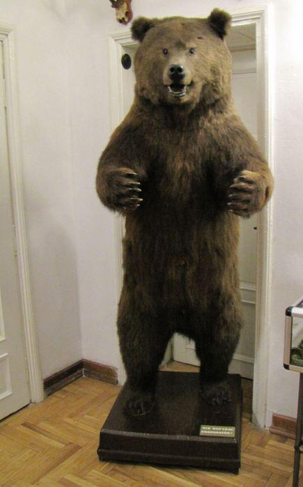 Osobnik wynajęty przez Panią dyr. Muzeum Przyrody w Drozdowie do pilnowania zasobów podarowanych przez Pana Sławomira Zgrzywę