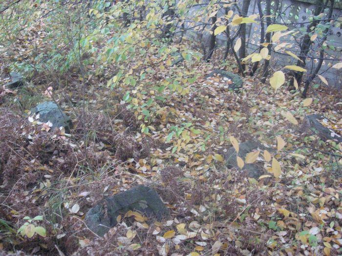 Nagrobki w zielsku i opadłych liściach 3