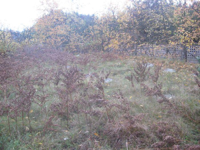 Nagrobki w zielsku i opadłych liściach 6