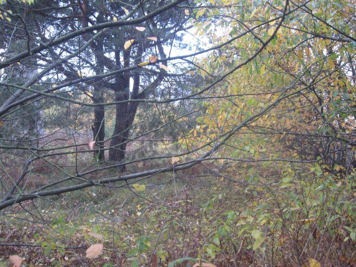 Drzewa na cmentarzu