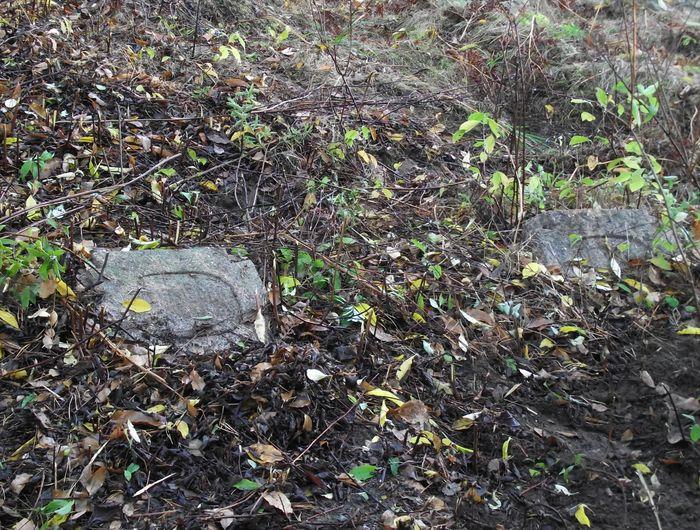 Nagrobki zarośnięte na cmentarzu w Chojnach Młodych,