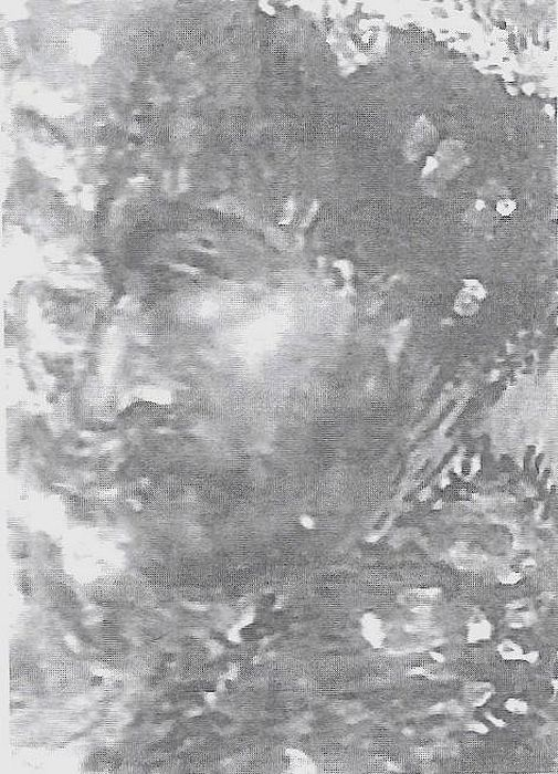 Portret hr. Ludwika de Fleury, autorstwa Jeana de Fleury.jpg