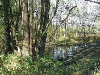 Z jednej strony pod samo obejście, rozlewa się staw, o wodzie ciemnej, ponurej… Pozostałości stawu Kaplów. Fot. 2016.