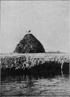 Tu la bocianów najlepsy raj. Fot. 1937 r.