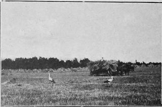 Komarów latem zatrzęsienie – tną niemożliwie do krwi, ze latem praca w polu i na łąkach, to prawdziwe katusze. Fot. 1937 r.