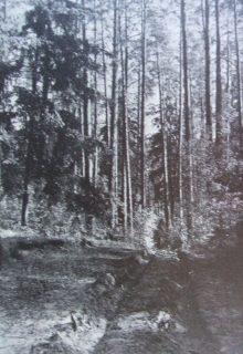 wolno się posuwała po wyboistej, wąskiej drożynie. Droga do Grzęd. Fot. 1935.
